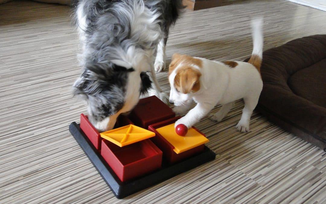 Jak dobrze zaopiekować się psem w dobie izolacji?